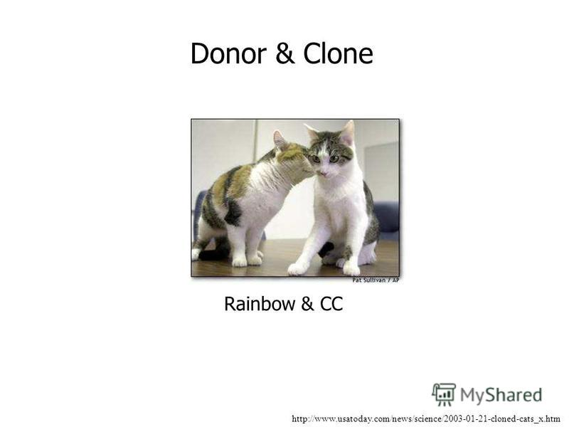 http://www.usatoday.com/news/science/2003-01-21-cloned-cats_x.htm Donor & Clone Rainbow & CC