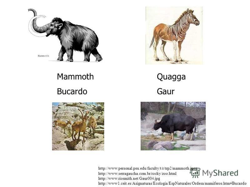 MammothQuagga BucardoGaur http://www.personal.psu.edu/faculty/t/r/trp2/mammoth.jpeg http://www.serragaucha.com.br/rocky/zoo.html http://www.riosmith.net/Gaur004.jpg http://www1.ceit.es/Asignaturas/Ecologia/EspNaturales/Ordesa/mamiferos.htm#Bucardo