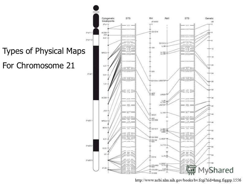 http://www.ncbi.nlm.nih.gov/books/bv.fcgi?rid=hmg.figgrp.1556 Types of Physical Maps For Chromosome 21