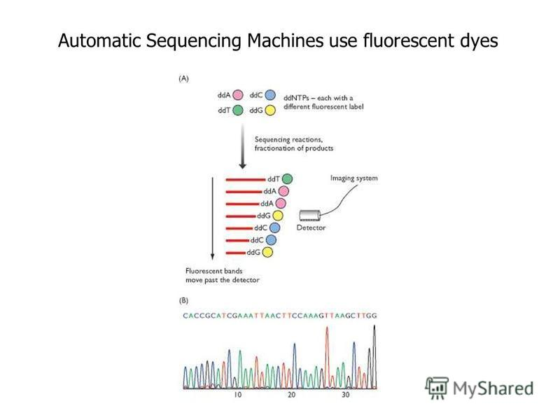 Automatic Sequencing Machines use fluorescent dyes