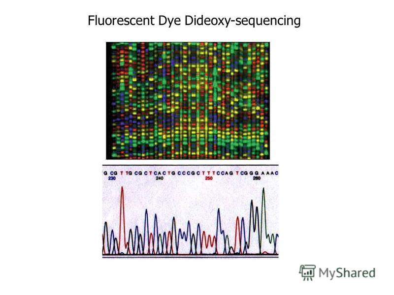Fluorescent Dye Dideoxy-sequencing