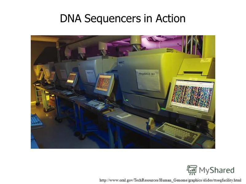 http://www.ornl.gov/TechResources/Human_Genome/graphics/slides/ttseqfacility.html DNA Sequencers in Action
