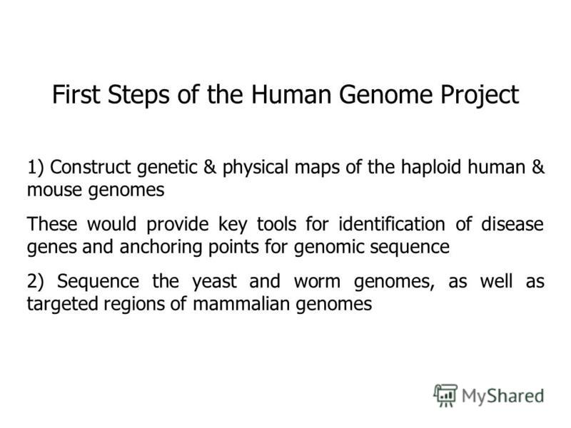 First Steps of the Human Genome Project 1) Construct genetic & physical maps of the haploid human & mouse genomes These would provide key tools for identification of disease genes and anchoring points for genomic sequence 2) Sequence the yeast and wo