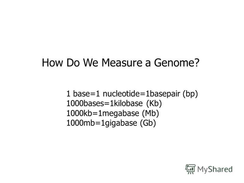 How Do We Measure a Genome? 1 base=1 nucleotide=1basepair (bp) 1000bases=1kilobase (Kb) 1000kb=1megabase (Mb) 1000mb=1gigabase (Gb)