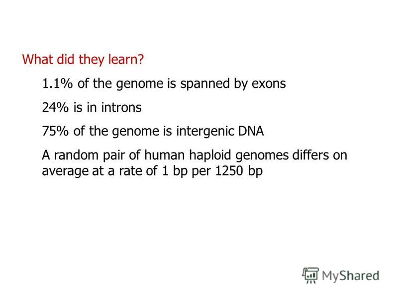 What did they learn? 1.1% of the genome is spanned by exons 24% is in introns 75% of the genome is intergenic DNA A random pair of human haploid genomes differs on average at a rate of 1 bp per 1250 bp