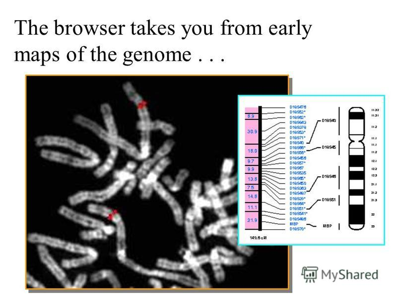 The browser takes you from early maps of the genome...