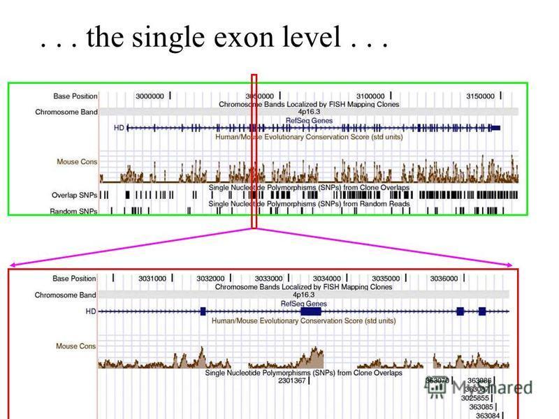 ... the single exon level...