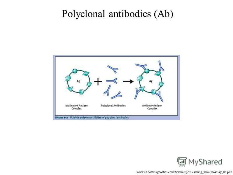 Polyclonal antibodies (Ab) www.abbottdiagnostics.com/Science/pdf/learning_immunoassay_01.pdf