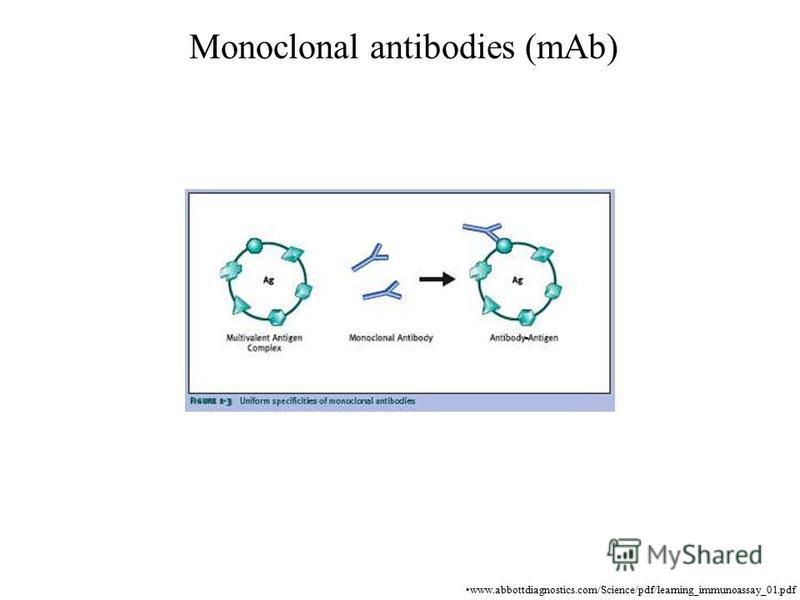 Monoclonal antibodies (mAb) www.abbottdiagnostics.com/Science/pdf/learning_immunoassay_01.pdf