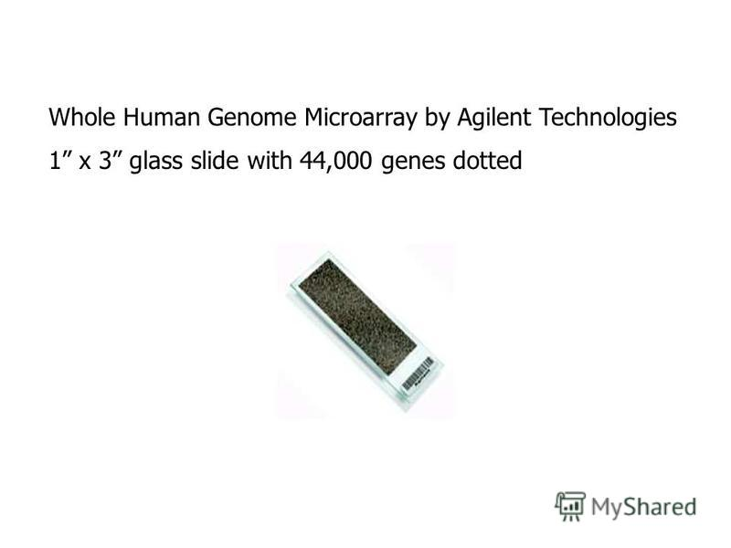 Whole Human Genome Microarray by Agilent Technologies 1 x 3 glass slide with 44,000 genes dotted