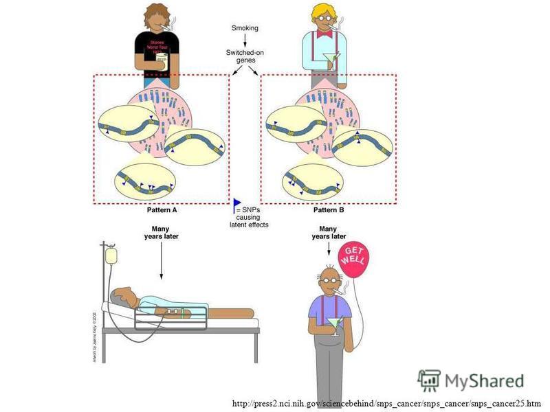http://press2.nci.nih.gov/sciencebehind/snps_cancer/snps_cancer/snps_cancer25.htm