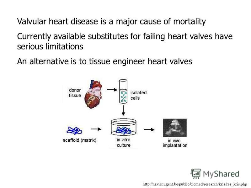 http://navier.ugent.be/public/biomed/research/kris/res_kris.php Valvular heart disease is a major cause of mortality Currently available substitutes for failing heart valves have serious limitations An alternative is to tissue engineer heart valves
