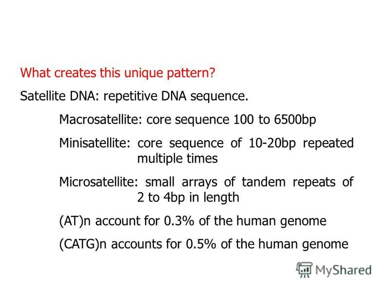 What creates this unique pattern? Satellite DNA: repetitive DNA sequence. Macrosatellite: core sequence 100 to 6500bp Minisatellite: core sequence of 10-20bp repeated multiple times Microsatellite: small arrays of tandem repeats of 2 to 4bp in length