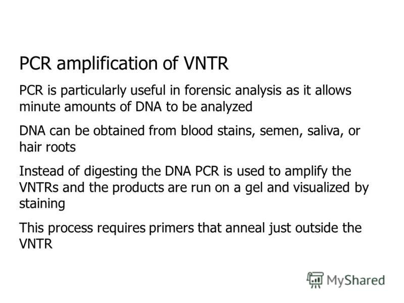 PCR amplification of VNTR PCR is particularly useful in forensic analysis as it allows minute amounts of DNA to be analyzed DNA can be obtained from blood stains, semen, saliva, or hair roots Instead of digesting the DNA PCR is used to amplify the VN