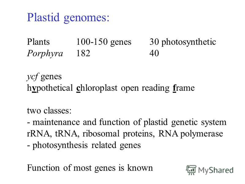 Plastid genomes: Plants100-150 genes30 photosynthetic Porphyra18240 ycf genes hypothetical chloroplast open reading frame two classes: - maintenance and function of plastid genetic system rRNA, tRNA, ribosomal proteins, RNA polymerase - photosynthesi