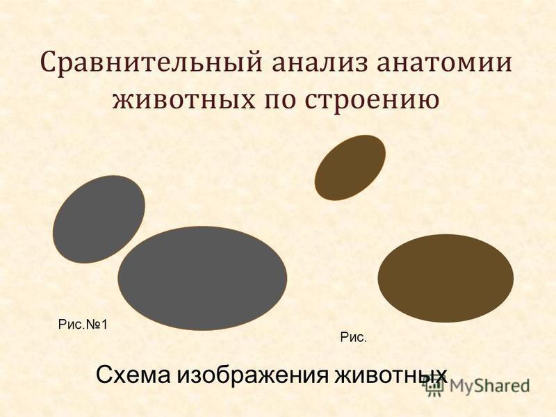 Сравнительный анализ анатомии животных по строению Схема изображения животных Рис.1 Рис.