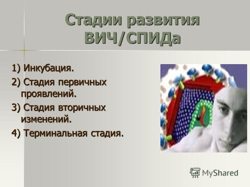 Стадии развития ВИЧ/СПИДа 1) Инкубация. 2) Стадия первичных проявлений. 3) Стадия вторичных изменений. 4) Терминальная стадия.