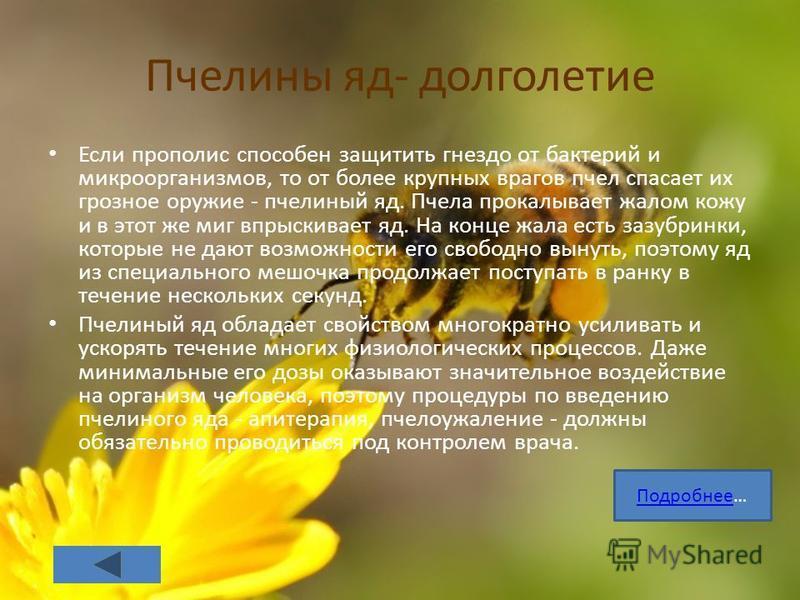 Пчелины яд- долголетие Если прополис способен защитить гнездо от бактерий и микроорганизмов, то от более крупных врагов пчел спасает их грозное оружие - пчелиный яд. Пчела прокалывает жалом кожу и в этот же миг впрыскивает яд. На конце жала есть за