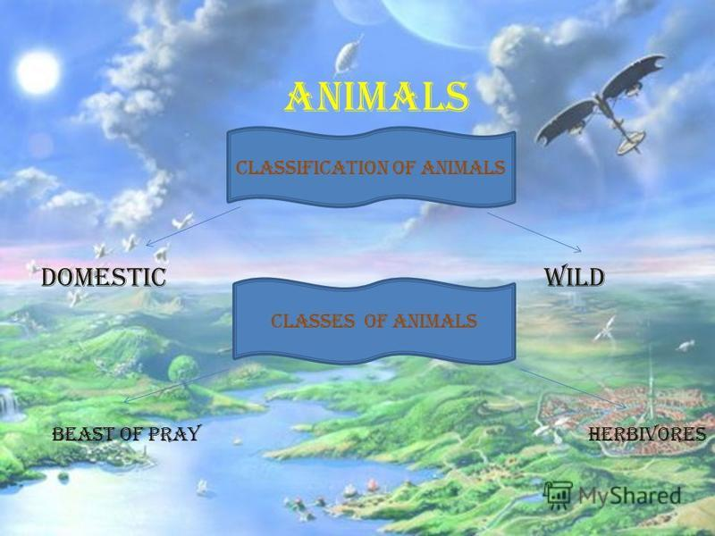 Animals Domestic Wild classification of animals Classes of animals beast of prayherbivores