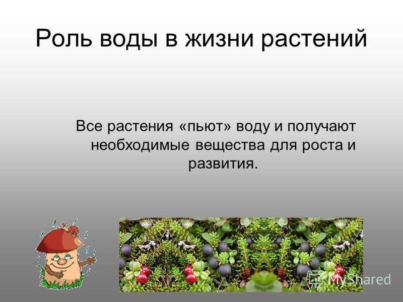 Роль воды в жизни растений Все растения «пьют» воду и получают необходимые вещества для роста и развития.