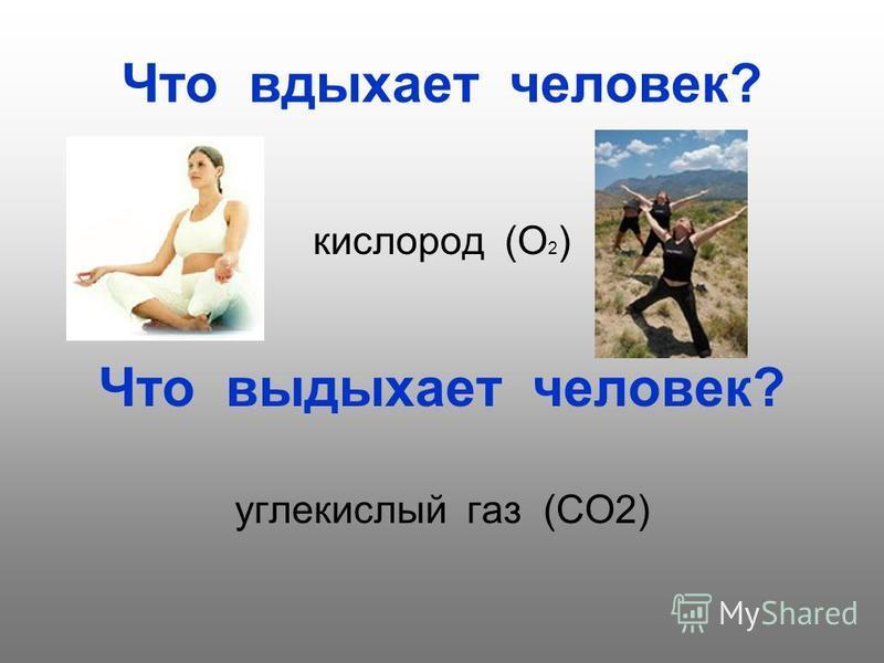 Что вдыхает человек? кислород (О 2 ) Что выдыхает человек? углекислый газ (СО2)