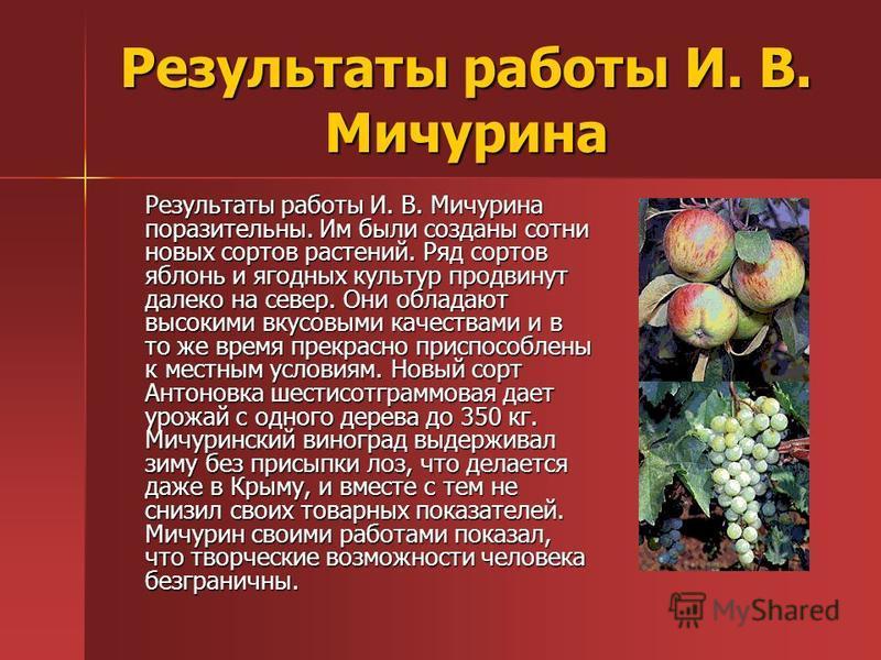 Результаты работы И. В. Мичурина Результаты работы И. В. Мичурина поразительны. Им были созданы сотни новых сортов растений. Ряд сортов яблонь и ягодных культур продвинут далеко на север. Они обладают высокими вкусовыми качествами и в то же время пре