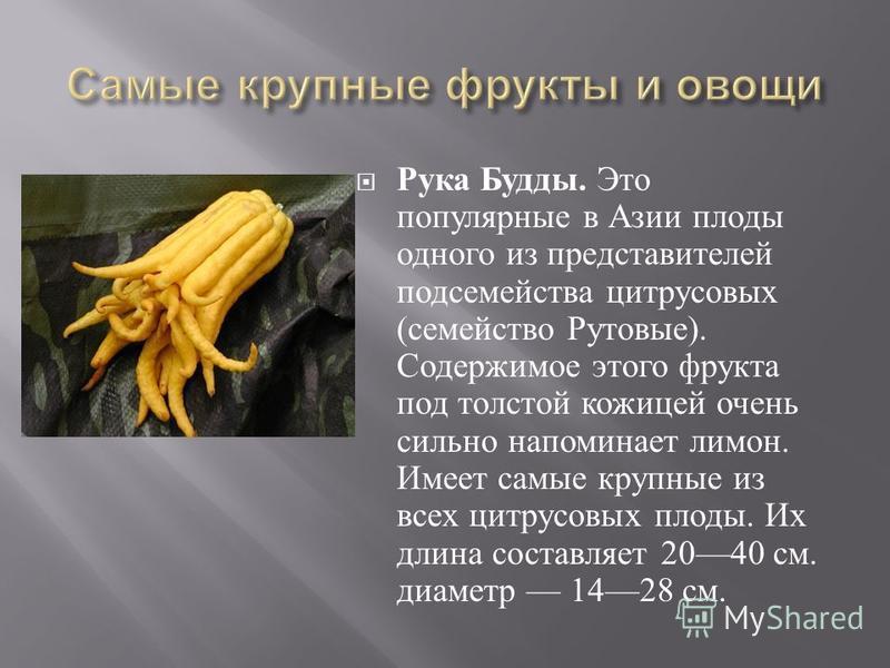 Рука Будды. Это популярные в Азии плоды одного из представителей подсемейства цитрусовых ( семейство Рутовые ). Содержимое этого фрукта под толстой кожицей очень сильно напоминает лимон. Имеет самые крупные из всех цитрусовых плоды. Их длина составля