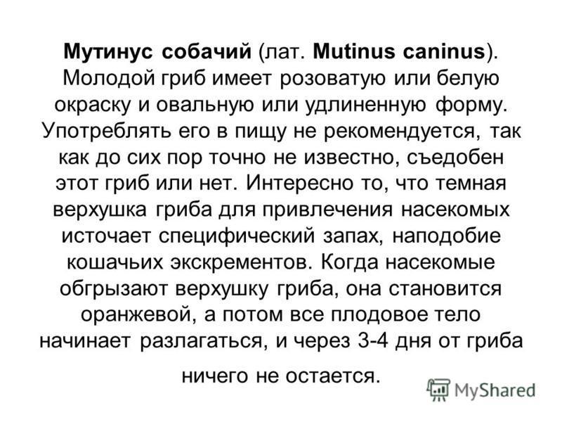 Мутинус собачий (лат. Mutinus caninus). Молодой гриб имеет розоватую или белую окраску и овальную или удлиненную форму. Употреблять его в пищу не рекомендуется, так как до сих пор точно не известно, съедобен этот гриб или нет. Интересно то, что темна