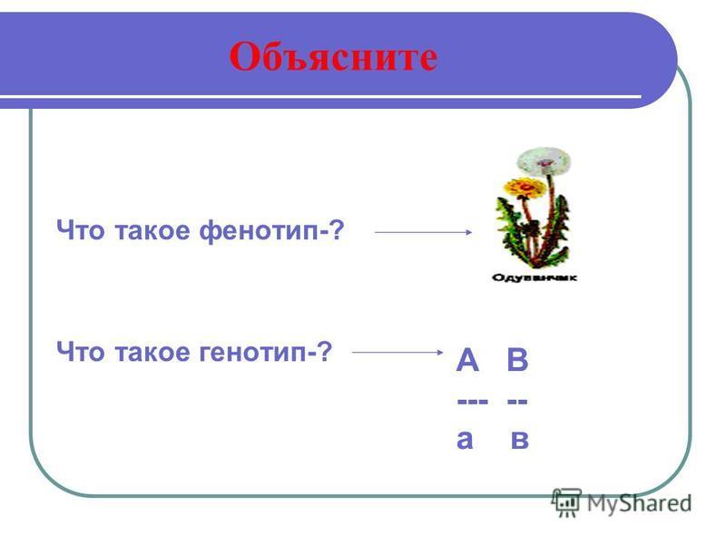 Объясните Что такое фенотип-? Что такое генотип-? А В --- -- а в