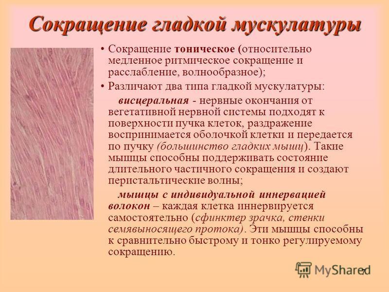 7 Сокращение гладкой мускулатуры Сокращение тоническое (относительно медленное ритмическое сокращение и расслабление, волнообразное); Различают два типа гладкой мускулатуры: висцеральная - нервные окончания от вегетативной нервной системы подходят к