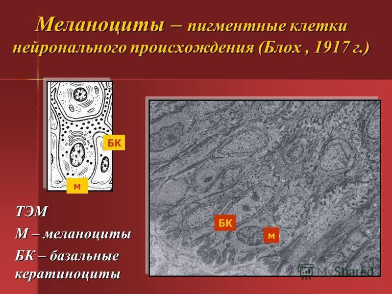 Кератиноцит