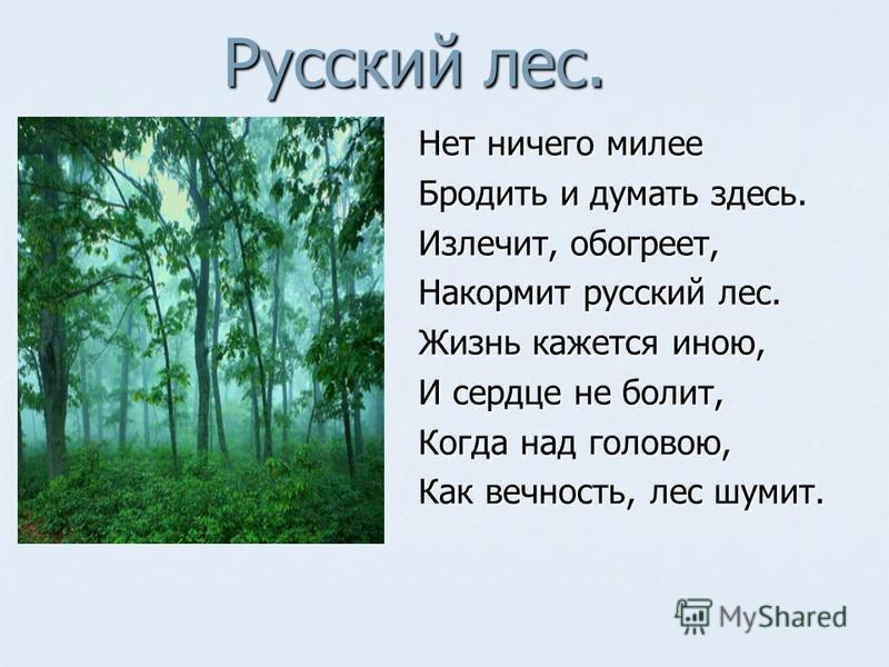 Русский лес. Нет ничего милее Бродить и думать здесь. Излечит, обогреет, Накормит русский лес. Жизнь кажется иною, И сердце не болит, Когда над головою, Как вечность, лес шумит.