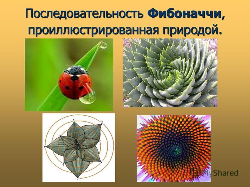 Последовательность Фибоначчи, проиллюстрированная природой.