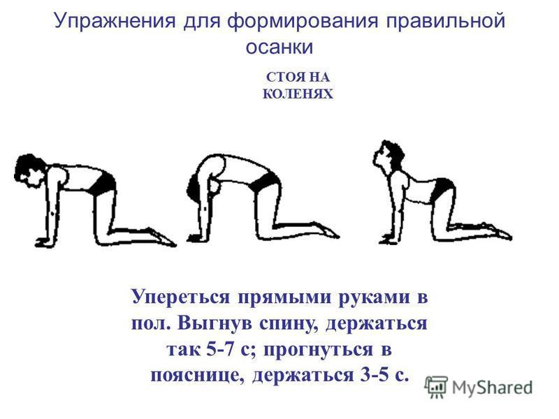 Упражнения для формирования правильной осанки Упереться прямыми руками в пол. Выгнув спину, держаться так 5-7 с; прогнуться в пояснице, держаться 3-5 с. СТОЯ НА КОЛЕНЯХ