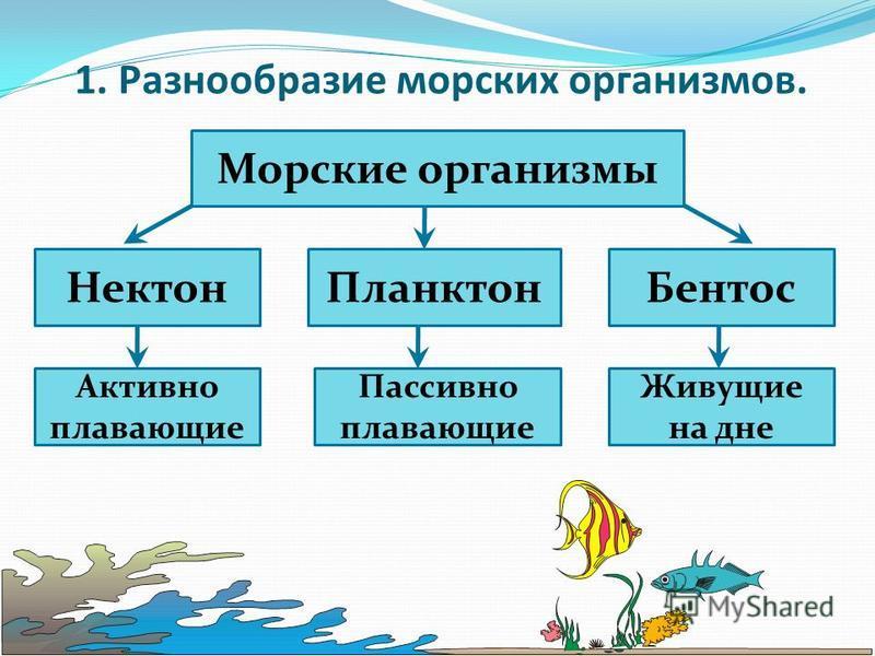 1. Разнообразие морских организмов. Морские организмы Нектон ПланктонБентос Активно плавающие Пассивно плавающие Живущие на дне