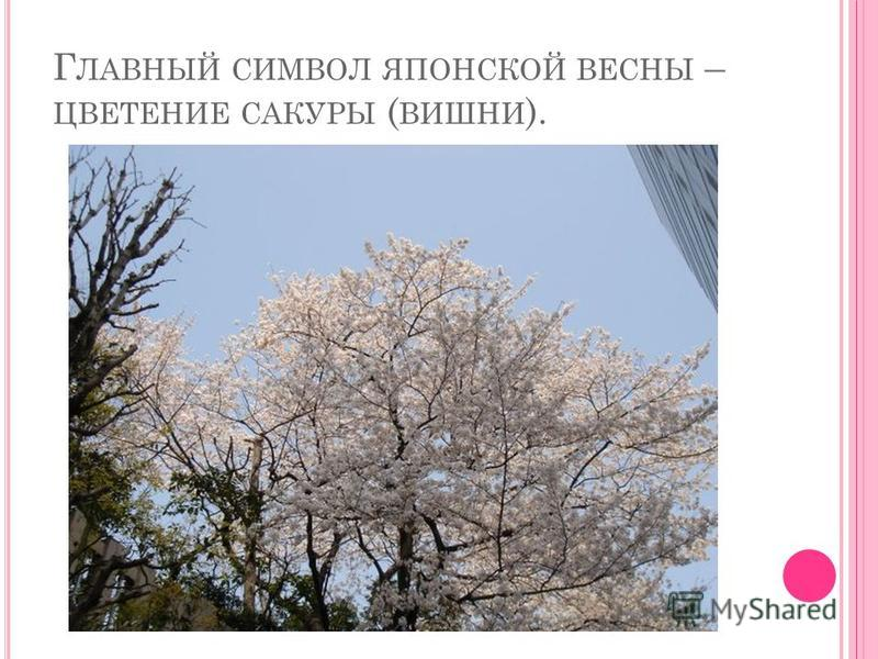 Г ЛАВНЫЙ СИМВОЛ ЯПОНСКОЙ ВЕСНЫ – ЦВЕТЕНИЕ САКУРЫ ( ВИШНИ ).