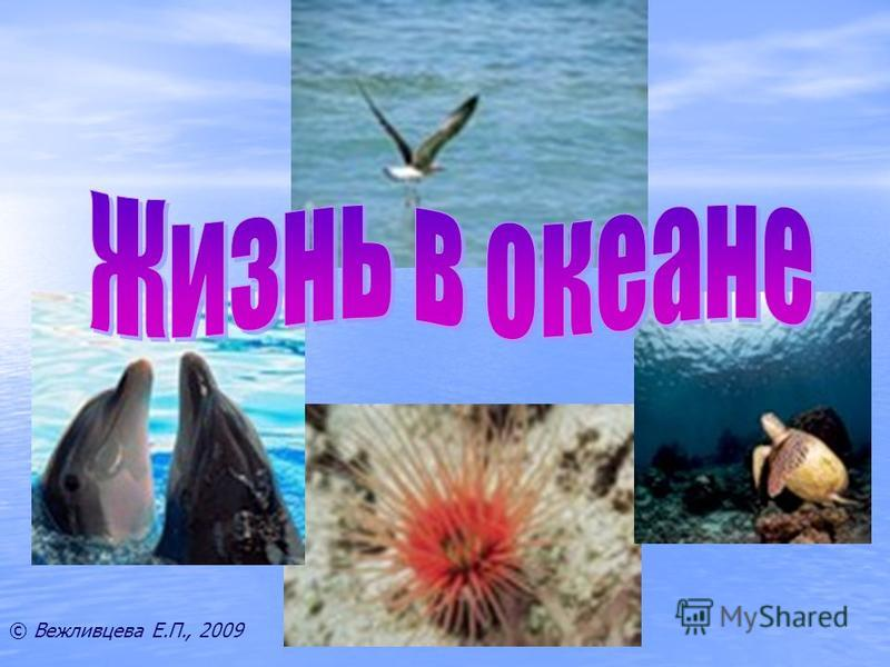 © Вежливцева Е.П., 2009