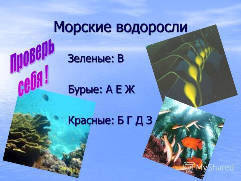 Морские водоросли Зеленые: В Бурые: А Е Ж Красные: Б Г Д З