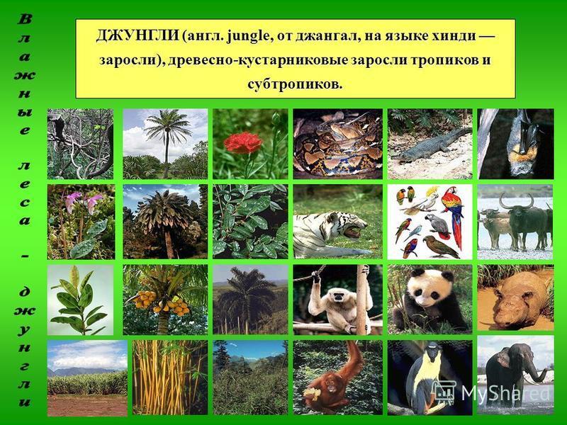 ДЖУНГЛИ (англ. jungle, от джангал, на языке хинди заросли), древесно-кустарниковые заросли тропиков и субтропиков.