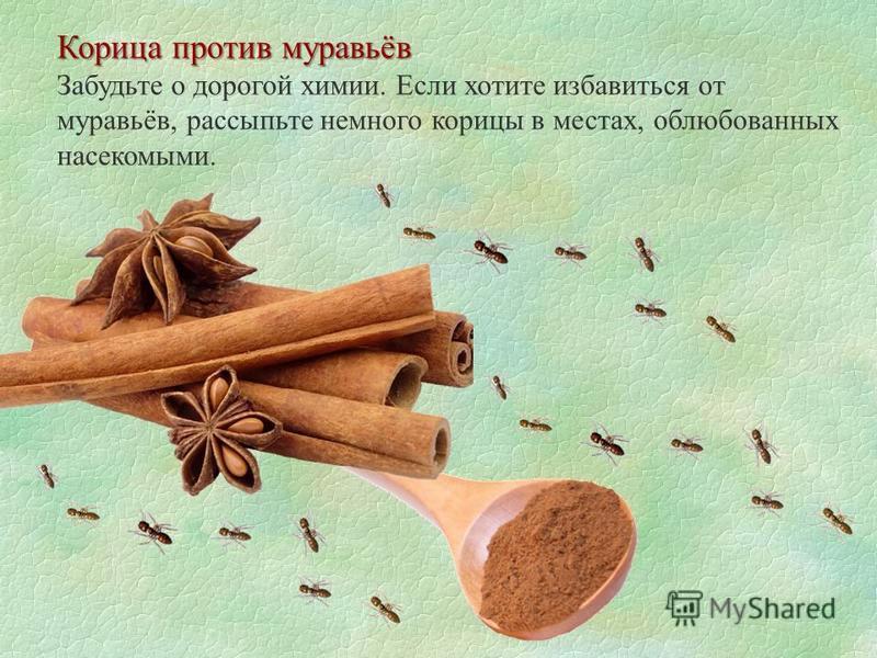 Корица против муравьёв Забудьте о дорогой химии. Если хотите избавиться от муравьёв, рассыпьте немного корицы в местах, облюбованных насекомыми.