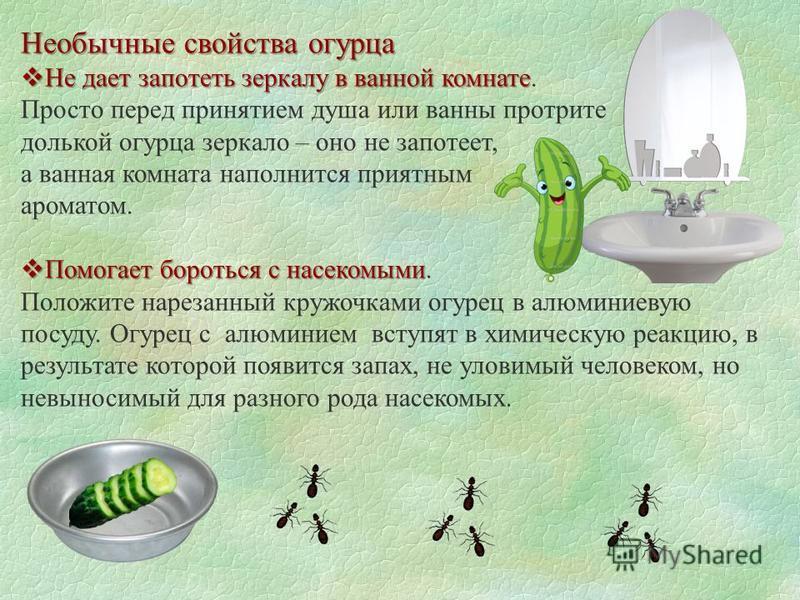 Необычные свойства огурца Не дает запотеть зеркалу в ванной комнате Не дает запотеть зеркалу в ванной комнате. Просто перед принятием душа или ванны протрите долькой огурца зеркало – оно не запотеет, а ванная комната наполнится приятным ароматом. Пом