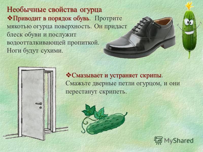 Необычные свойства огурца Приводит в порядок обувь Приводит в порядок обувь. Протрите мякотью огурца поверхность. Он придаст блеск обуви и послужит водоотталкивающей пропиткой. Ноги будут сухими. Смазывает и устраняет скрипы Смазывает и устраняет скр