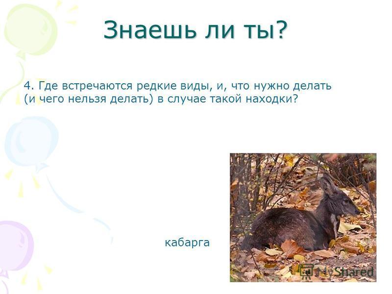 Знаешь ли ты? 4. Где встречаются редкие виды, и, что нужно делать (и чего нельзя делать) в случае такой находки? кабарга