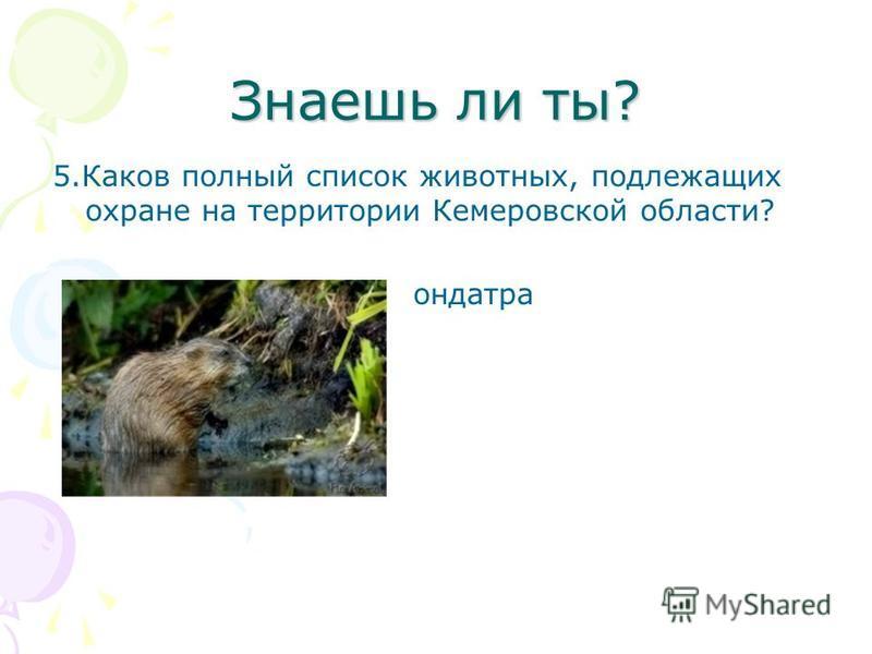 Знаешь ли ты? 5. Каков полный список животных, подлежащих охране на территории Кемеровской области? ондатра