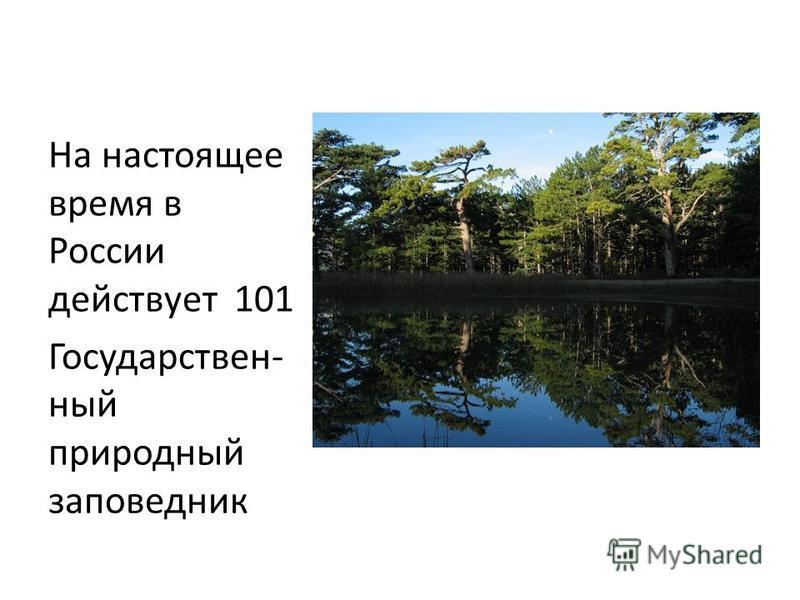 На настоящее время в России действует 101 Государствен- ный природный ззаповедник
