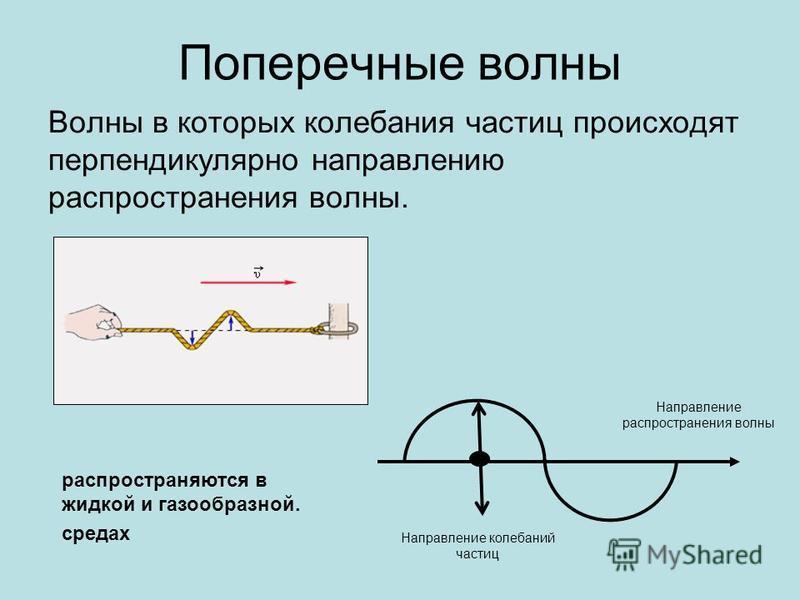 Поперечные волны Волны в которых колебания частиц происходят перпендикулярно направлению распространения волны. Направление колебаний частиц Направление распространения волны распространяются в жидкой и газообразной. средах