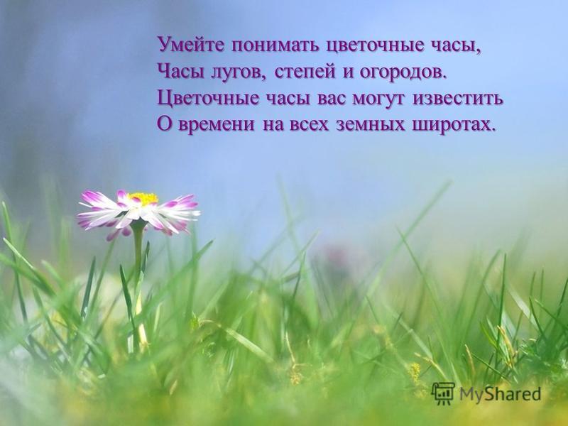 Умейте понимать цветочные часы, Часы лугов, степей и огородов. Цветочные часы вас могут известить О времени на всех земных широтах.