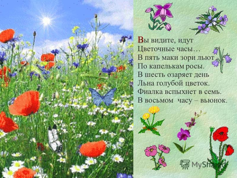 В В ы видите, идут Цветочные часы… В пять маки зори льют По капелькам росы. В шесть озаряет день Льна голубой цветок. Фиалка вспыхнет в семь. В восьмом часу – вьюнок.