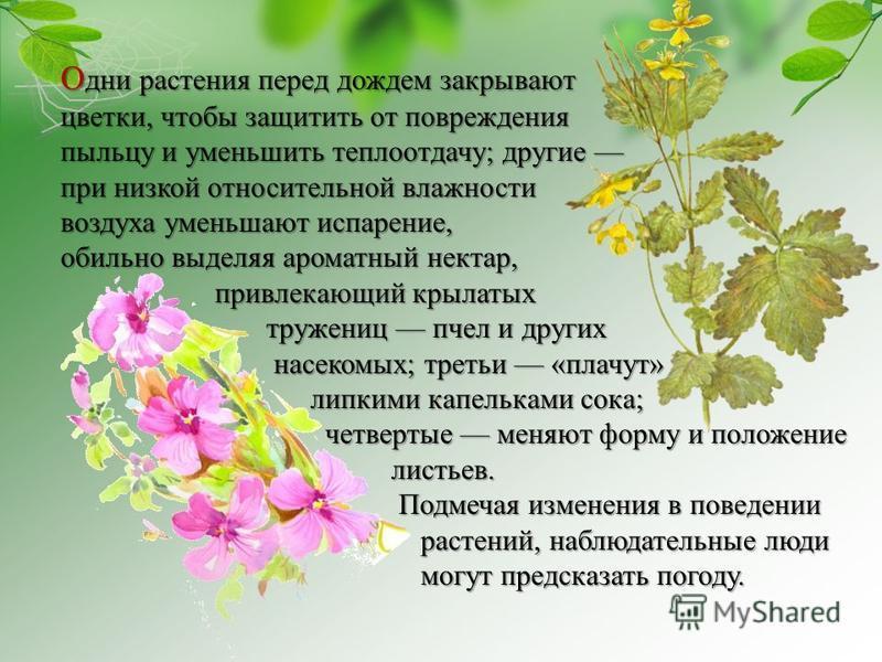 О дни растения перед дождем закрывают цветки, чтобы защитить от повреждения пыльцу и уменьшить теплоотдачу; другие пыльцу и уменьшить теплоотдачу; другие при низкой относительной влажности воздуха уменьшают испарение, обильно выделяя ароматный нектар