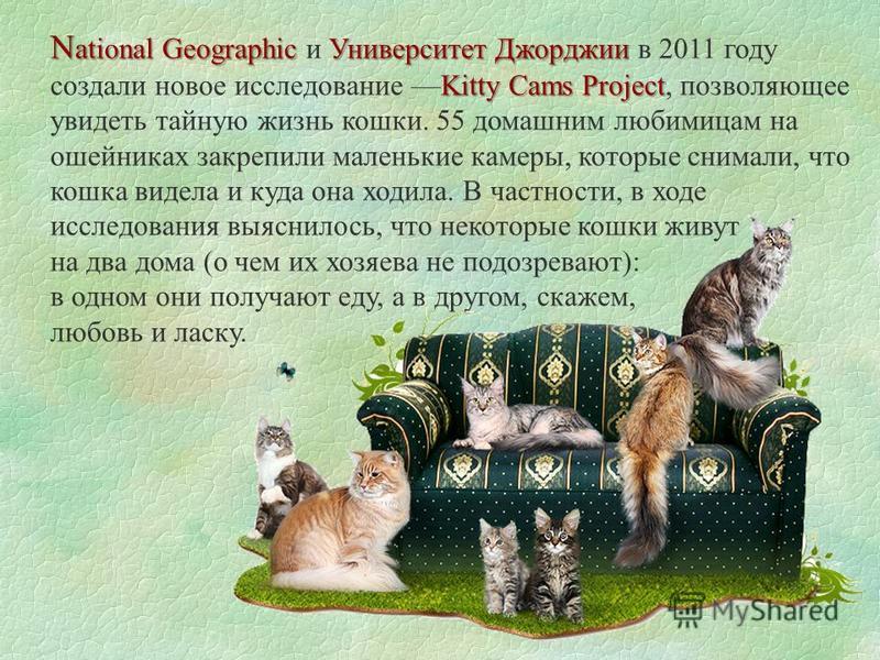 N ational Geographic Университет Джорджии Kitty Cams Project N ational Geographic и Университет Джорджии в 2011 году создали новое исследование Kitty Cams Project, позволяющее увидеть тайную жизнь кошки. 55 домашним любимицам на ошейниках закрепили м